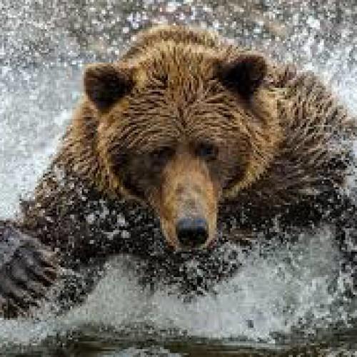 Iran wildlife & nature